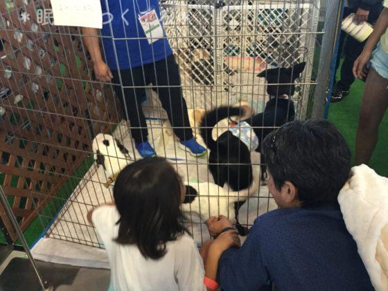 NPO法人ワンズパートナの会による犬猫譲渡会