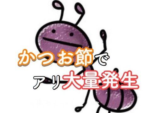かつお節でアリが大量発生