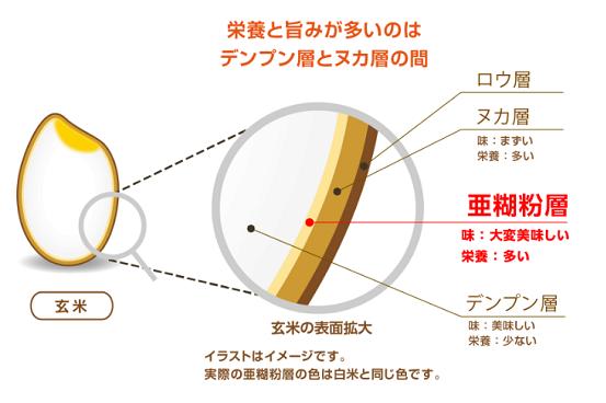 金芽米に残る栄養と旨みが多い亜糊粉層(あこふんそう)