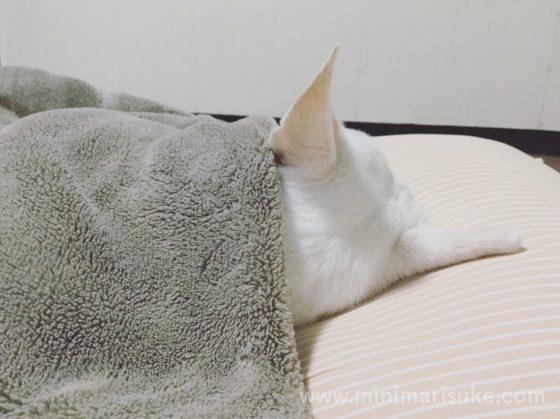 人間のような寝姿のマリさん後頭部