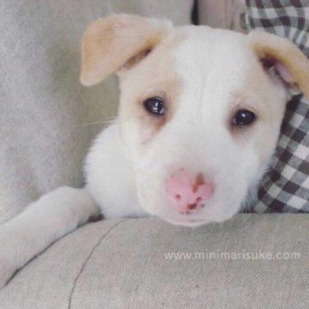 かわいすぎるマリさんの子犬時代